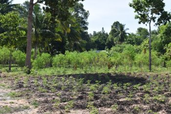 Moringa-Land-Baca-Villa-05-2015-12