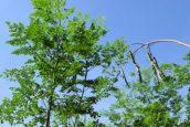 Moringa-Land-Baca-Villa-05-2015-6