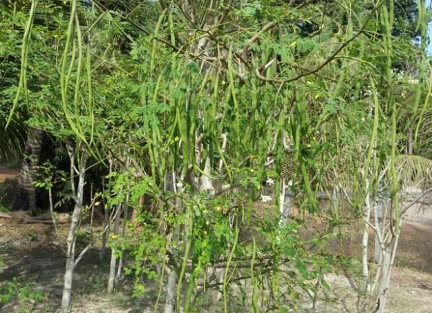 Pods-Land-Moringa-Cambodia-Baca-Villa