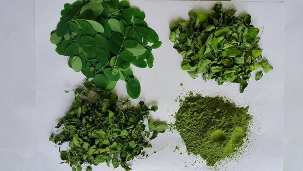 Moringa Oleifera Leaves for Use in Clinical Studies.