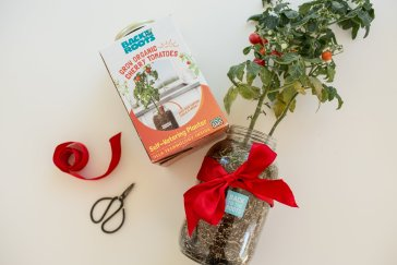 back to the roots self watering tomato planter green gift indoor gardening kit best unique gift christmas gift idea