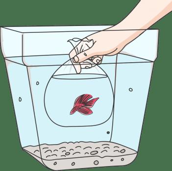 betta fish tank Temperature