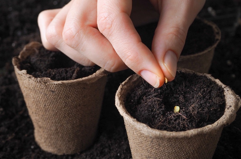 Close-up of planting from a seed starter kit
