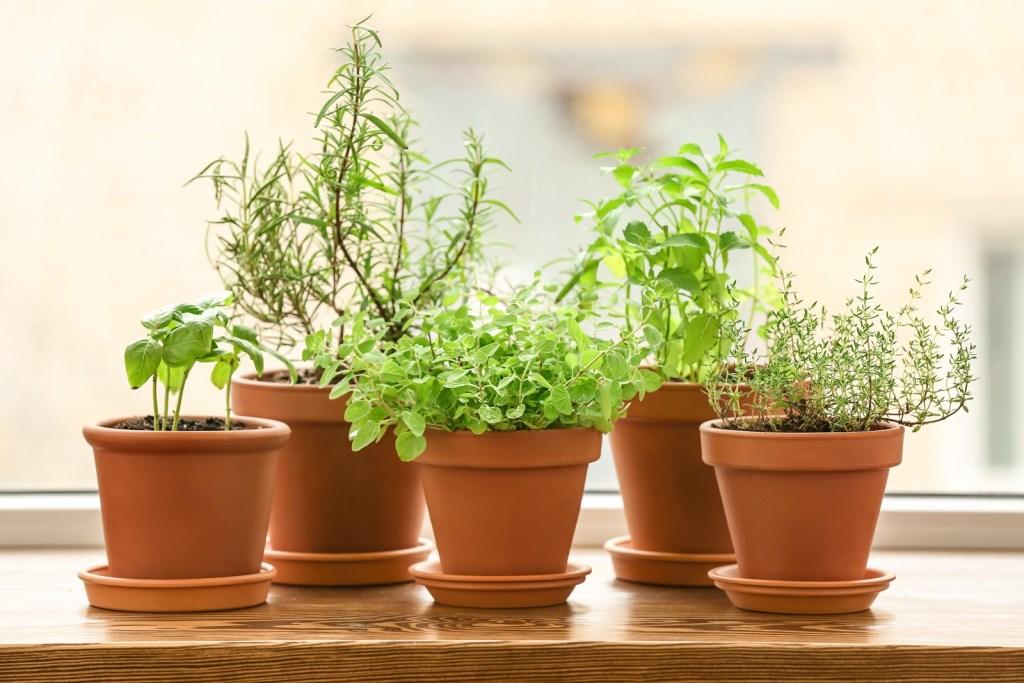 Seed starter kit: Terra cotta planters on windowsill