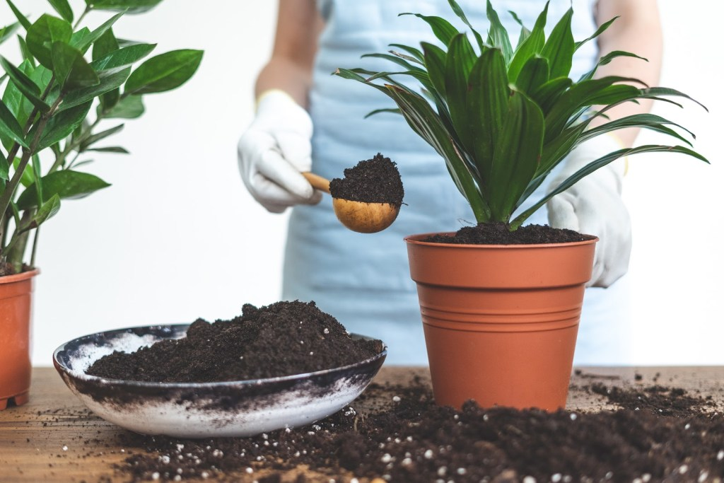 House plant and potting soil