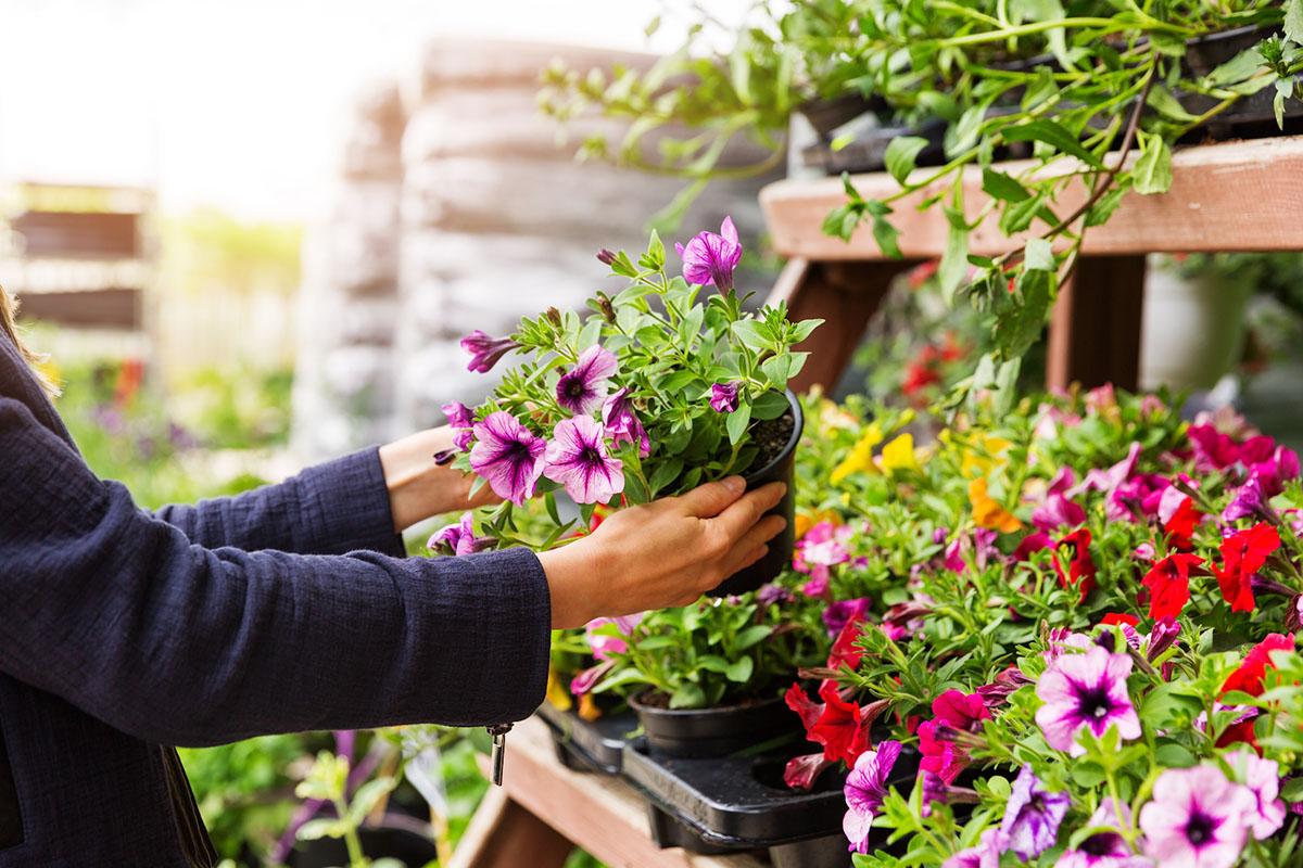 Tips and Tricks for Shopping The Home Depot Garden Center