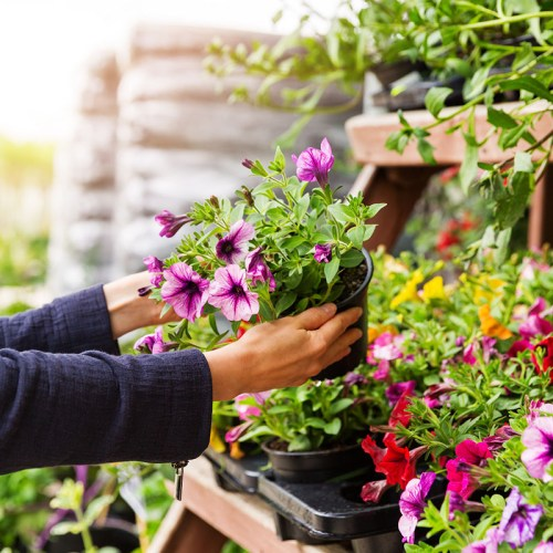 Tips and Tricks for Shopping The Home Depot Garden Center