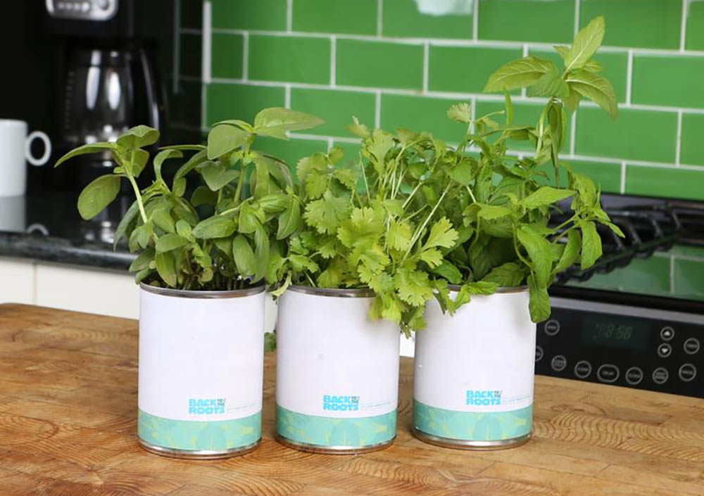 Gifts for gardeners: Back to the Roots herbs