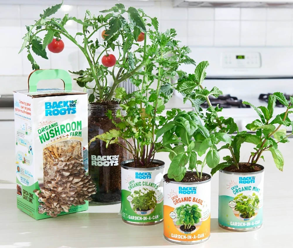 Back to the Roots starter growing kit