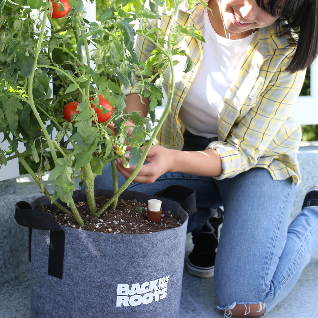 How to grow tomatoes in a pot: Woman tending to a tomato plant in a fabric pot