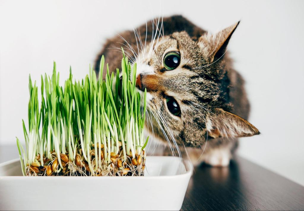 Cat nibbling grass on top of a table