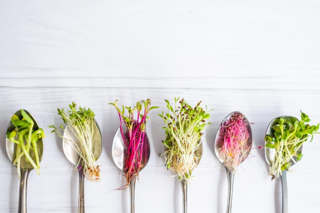 Variety of microgreens in spoons