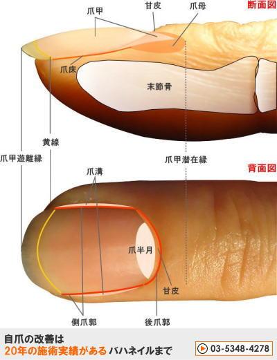 強く綺麗な爪を育てるネイルケア方法
