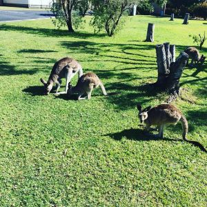 Australia: What a Wild Life