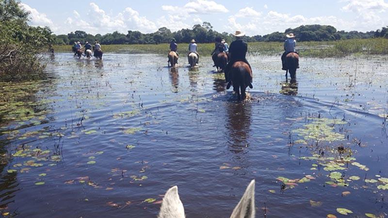 Seek adventure in Pantanal- Brazil