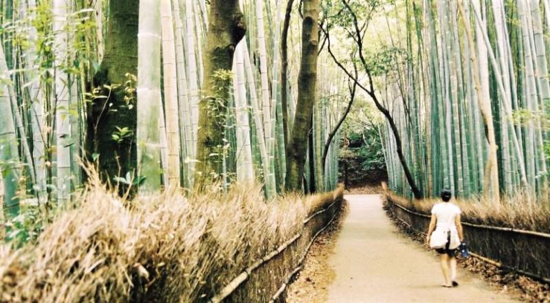 A tourist wandering through the serene Sagano Bamboo Forest- Japanese Mythology