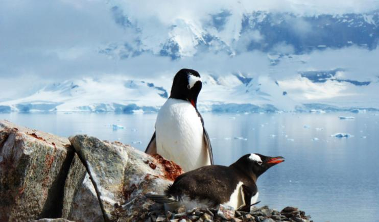 Little Penguins relaxing in Antarctica- Endangered Places