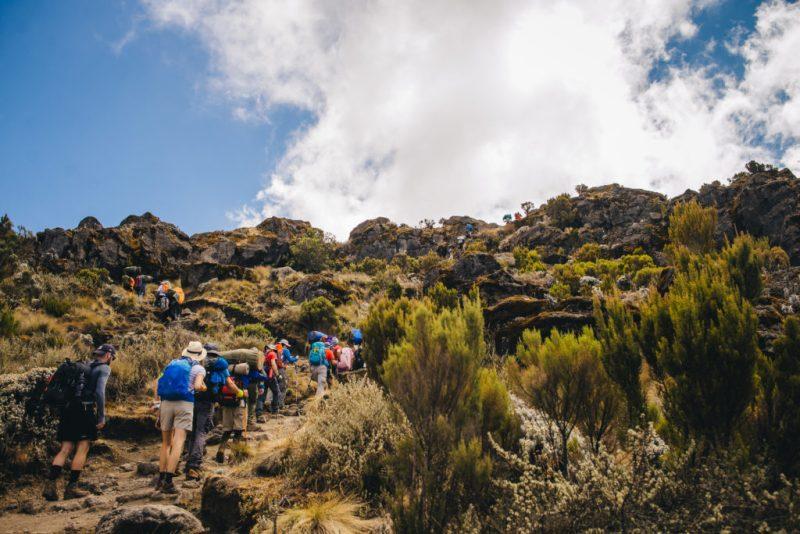 Group hike up Mount kilimanjaro through shrub land