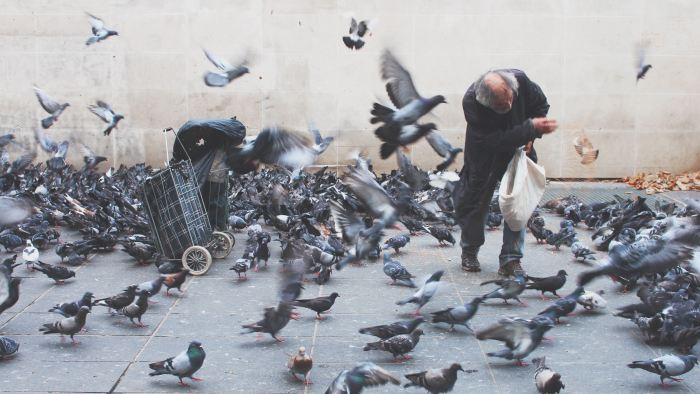 An old man, with a bag on wheels, surrounded by pigeons in throwing them food.