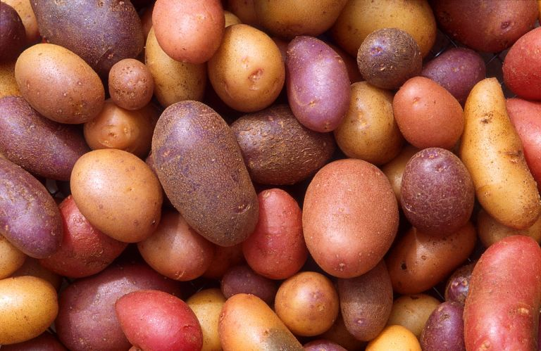 Different varieties of potato