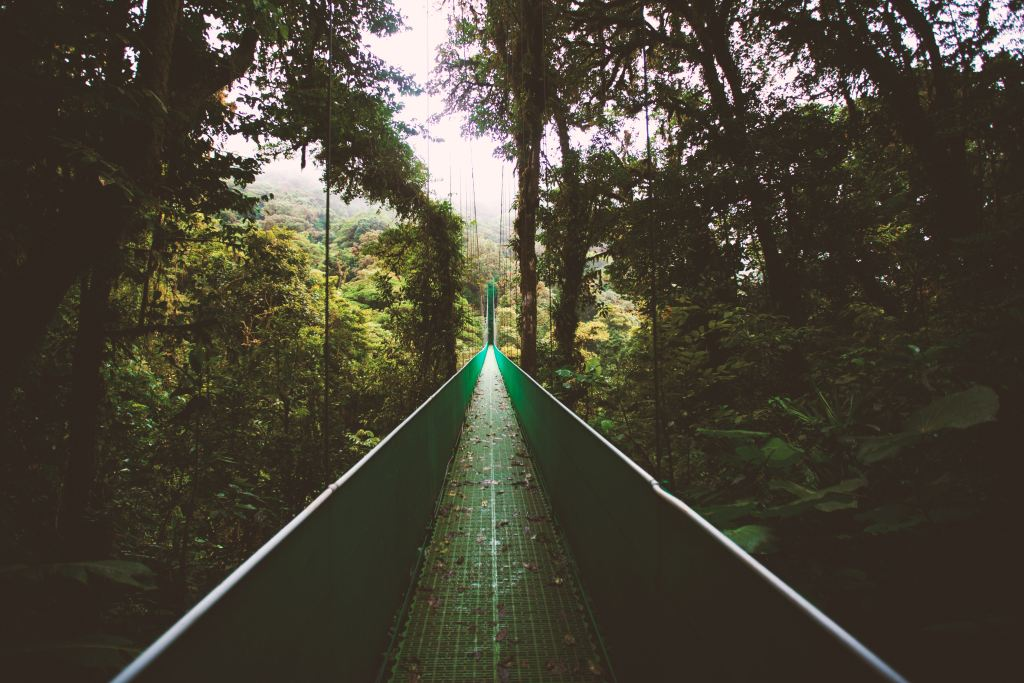 A bridge suspended above the forest floor in Costa Rica