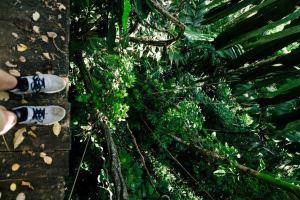 Costa Rica the Ecotourist's Jungle Paradise