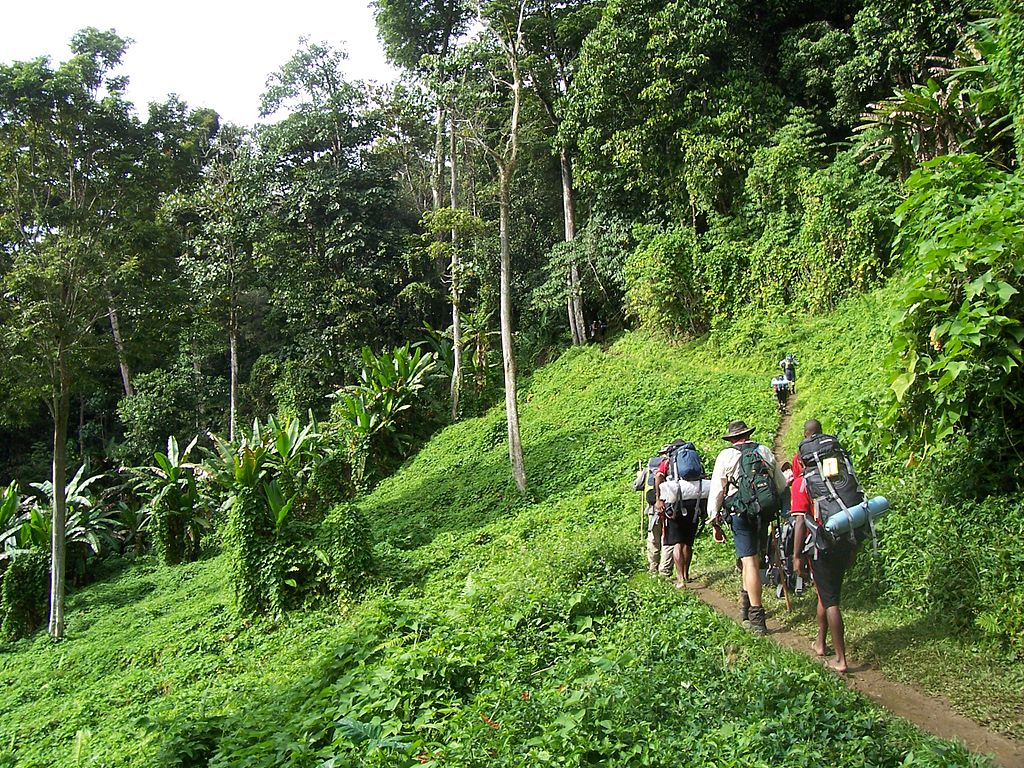 Hikers on the Kokoda track in Papua New Guinea rainforest