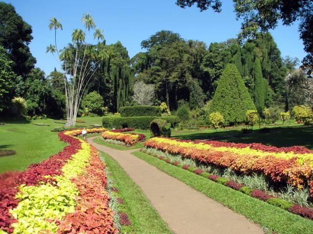 Peradeniya Royal Botanical Garden, a to do in Sri Lanka