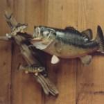 Largemouth Bass 3