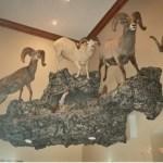 Mountain Sheep Scene 2