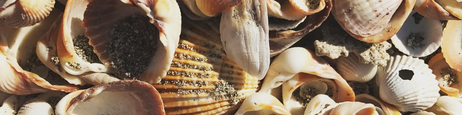 Muscheln-suchen am Strand von Apulien... eine schöne Beschäftigung für die Kleinen am Strand