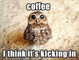 Owl Coffee Meme