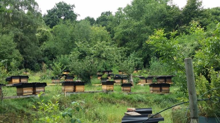 Bienenstand Allerheiligenberg Lahnstein