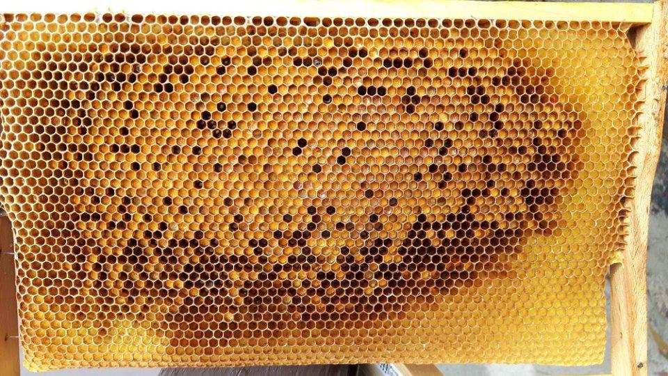 Pollenwabe