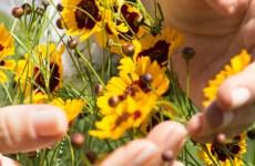 terapias reiki e florais de bach
