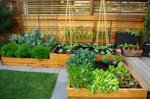 How Not to Outgrow Your Garden Design Budget