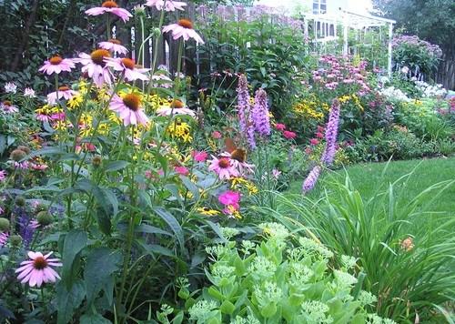 Gardening perennial plants