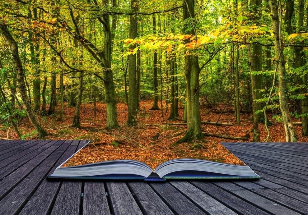 Resultado de imagen para el bosque de los libros