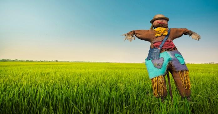 The Bicom Scarecrow