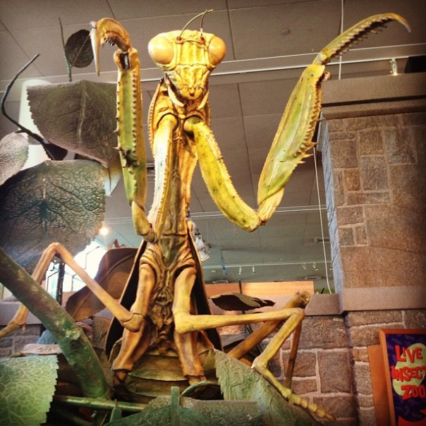 Holy! It's a giant #mantis! #2daysinseattle - from Instagram