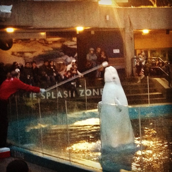 It's a big white whale! #Beluga - from Instagram