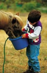cavallo bimbo