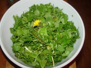 insalata tarassaco