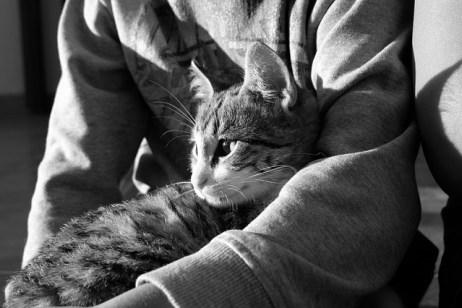 pet therapy gatto