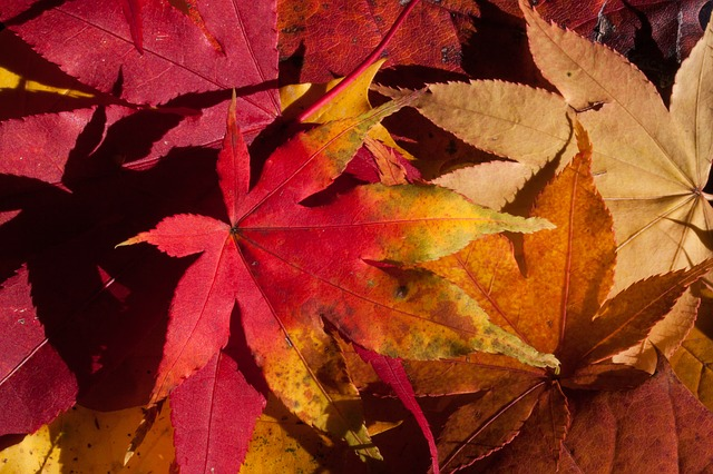 Risultati immagini per foglie secche.jpg