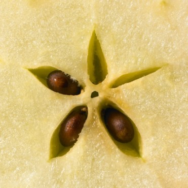Star and Apple Seeds