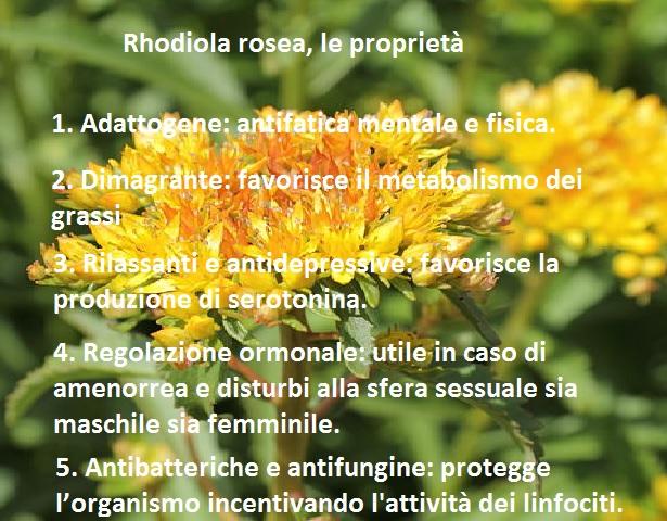 rhodiola rosea proprietà