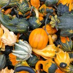 Giardino e orto didattico, i lavori di Ottobre