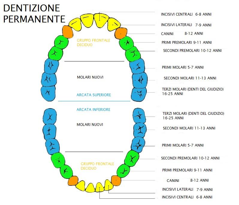 Calendario Dentini.La Seconda Dentizione O Dentizione Permanente Come E Quando
