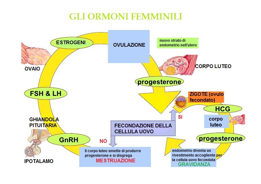 ormoni femminili